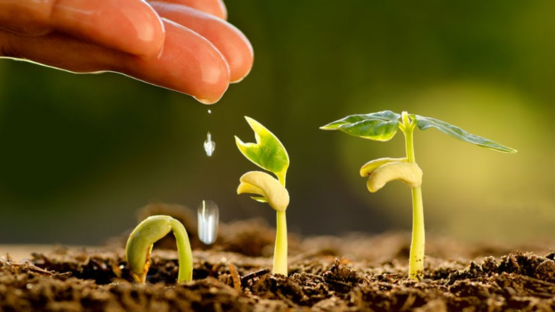 Tarım ve Hayvancılık Kimyasalları